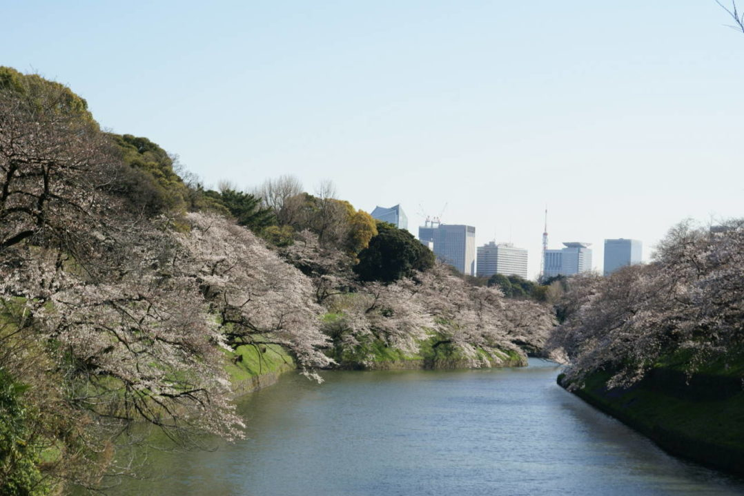 spring in the Imperial Palace