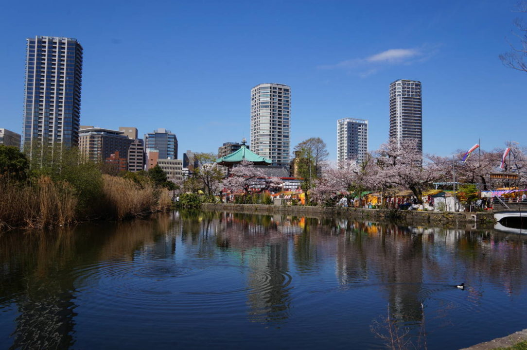 Ueno Park and Shinobazu Pond in spring